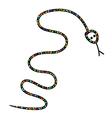 snake silhouette vector image
