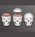 realistic human skull with eyes and brain isolated vector image