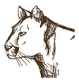 hand drawn cougar or mountain lion portrait vector image