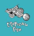 tropical fish - hand drawing vector image