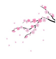 blooming cherry 1 vector image