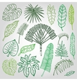 Tropical palm leavesbranches setOutlineGreen vector image