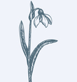 First spring flower - Snowdrop vector image