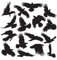 Crows Silhouette set 02 vector image