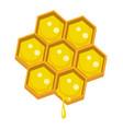 honeycomp vector image