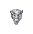 American Bison Head Watercolor vector image vector image