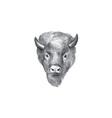 American Bison Head Watercolor vector image