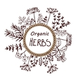 background hand drawn herbs and spices vector image