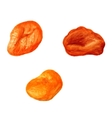 dried apricot vector image