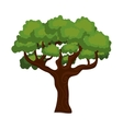 large and leafy tree isolated icon design vector image