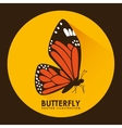 card butterfly vector image