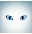blue cat eyes vector image vector image