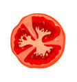 round tomato slice isolated vegetables ingredient vector image