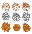 set with pine cones isolated on white vector image