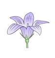purple flower isolated on the white vector image vector image