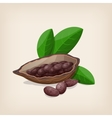 Cacao pods and beans with leaves vector image