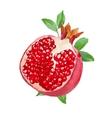 fresh watercolor pomegranate vector image