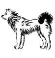 image of an dog akita vector image