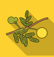 yellow mimosa flower icon in flat style isolated vector image