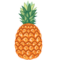 ananas vector image vector image