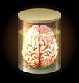 brain in jar vector image