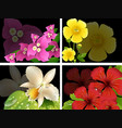 flowers on black background vector image