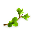 Spring leaves detailed vector image