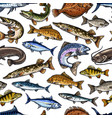 fish sketch seamless pattern vector image vector image