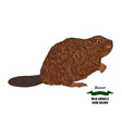 forest animal beaver hand drawn colored sketch on vector image