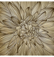 drawing of dahlia flower vector image vector image