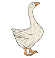 Sketch grey goose on a white background vector image vector image