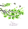 Birds with green branches vector image