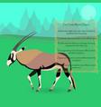 african oryx gazella or gemsbok vector image