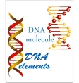 DNA molecule and elements vector image