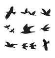 silhouette black fly flock of birds vector image