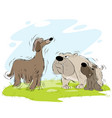 meeting dogs on the walk vector image