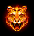 head of a tiger in tongues of flame on black vector image vector image