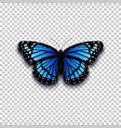 realistic butterfly icon vector image
