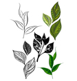 Set from Tea Shoots and Leaves vector image vector image