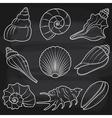Chalkboard Seashells Set vector image