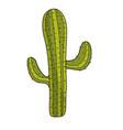 beautiful cactus plant of desert vector image