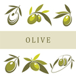 olive and olive oil vector image