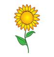 Sun flower vector image