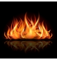 Fire on dark background vector image
