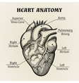 Black and White Heart Anatomy Graphic vector image