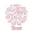 hand drawn tomato icons set vector image