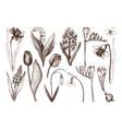 botanical of springtime plants vector image