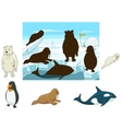 Arctic animals educational game for kids vector image