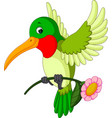 cartoon funny hummingbird vector image