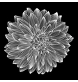 black and white drawing of dahlia vector image vector image